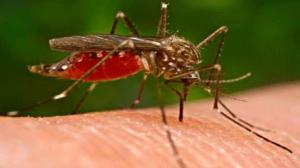 """الجزائر: داء """"الملاريا"""" يقتل 3 أشخاص رغم القضاء عليه منذ 50 سنة"""