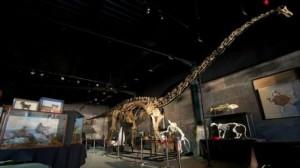 ديناصور ديبلودوكس نادر يباع في مزاد مقابل 650 ألف دولار