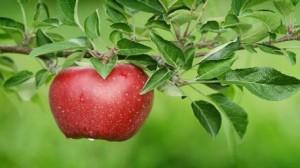 تفاحة واحدة يوميا تمنحُكِ الصحة والجمال