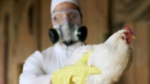 إنفلونزا الطيور