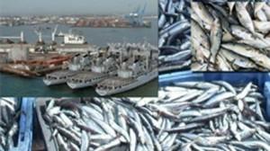 منتجات الصيد البحري