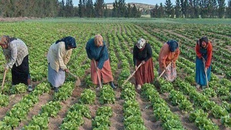 المرأة العاملة في القطاع الفلاحي