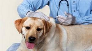 الحملة الوطنية للتلقيح ضد داء الكلب