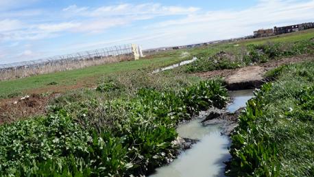 مساحات زراعية مروية بمياه الصرف الصحي