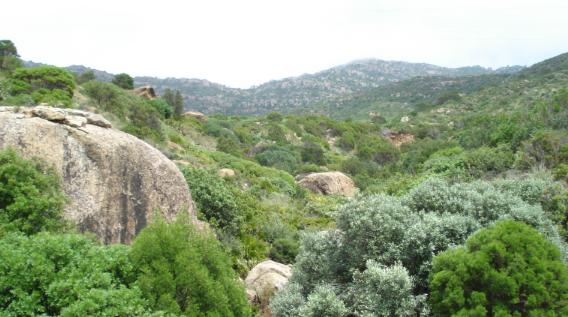 سليانة: قرار بمنع الجولان بكافة الطرقات المؤدية إلى جبل السرج وعين بوسعدية