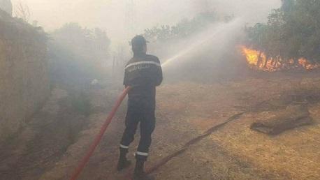 إخماد حريق برواد التهم 8 هكتارات من أشجار الصنوبر