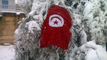 تونس قلوج