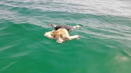 جرجيس: البحر يلفظ عددا من جثث المهاجرين