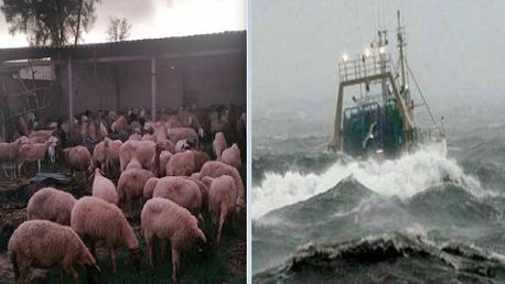 وزارة الفلاحة تدعو إلى عدم الإبحار أو ترك المواشي في الخارج