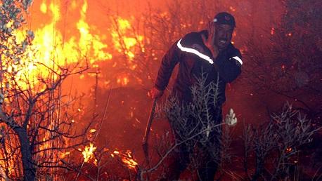 حرائق غابات الجزائر
